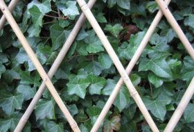 Ideaal om te gebruiken voor klimplanten of als decoratie.