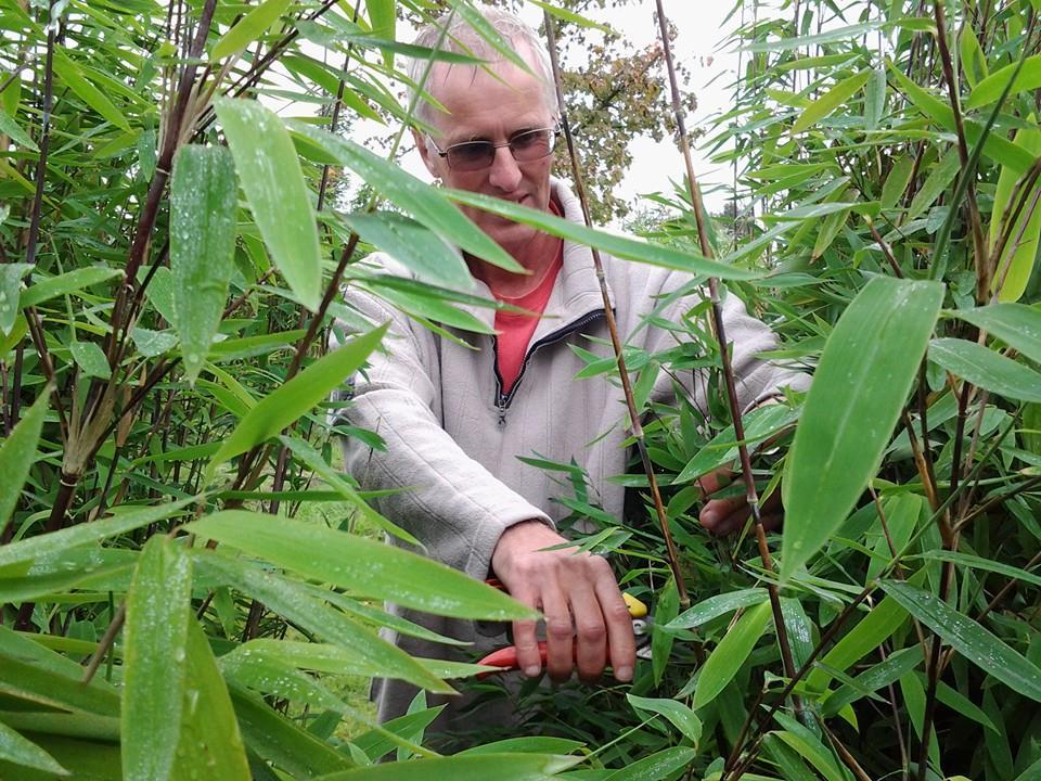 Workshop bamboe snoeien