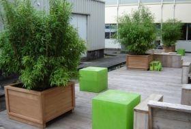 bamboe op het terras