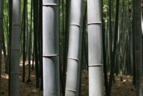 Bamboe palen en stokken.