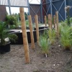 Project aanleg siergrassen- en bamboetuin.
