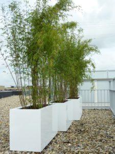 Project plaatsen bakken niet-woekerende bamboe.