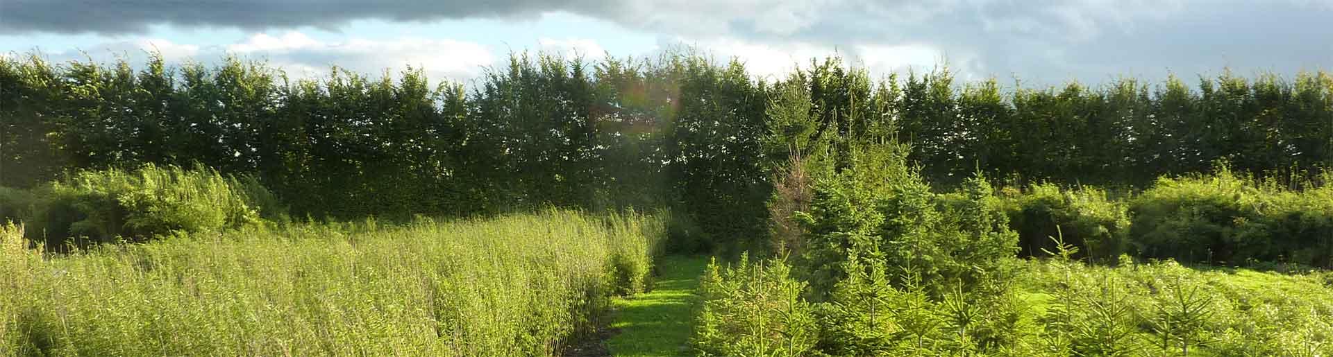 biologische kwekerij Randijk aan de Laapeerseweg in Leusden.