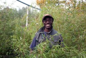 Jarrett Scholsberg, siergrassen kweker en allround kwekerij medewerker
