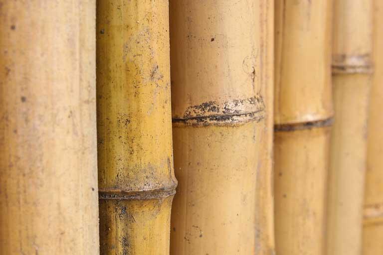 Waarom bamboe scheurt