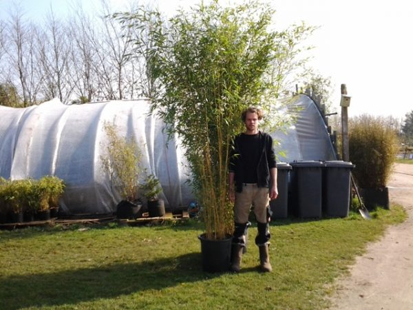 huur bamboe hoog