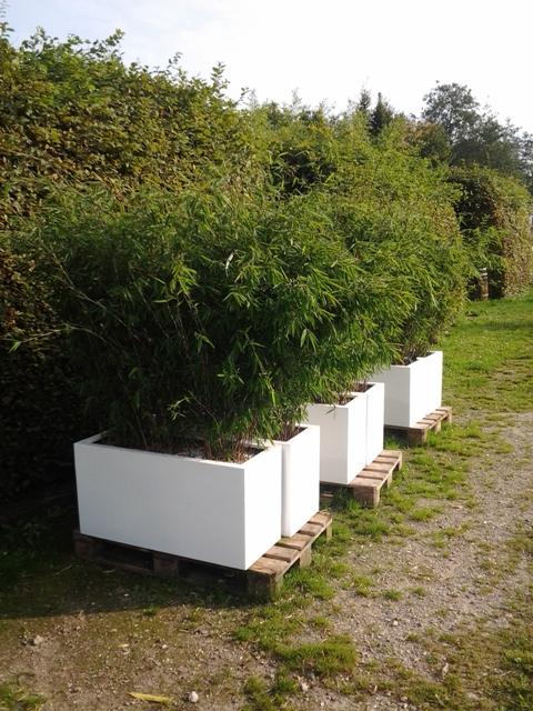 huur bamboe dubbel