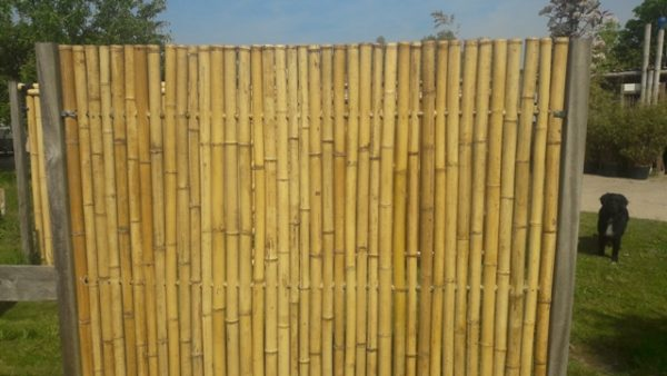 Bamboescherm van dikke bamboe.