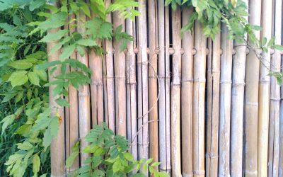 Klimplant tegen bamboe schutting